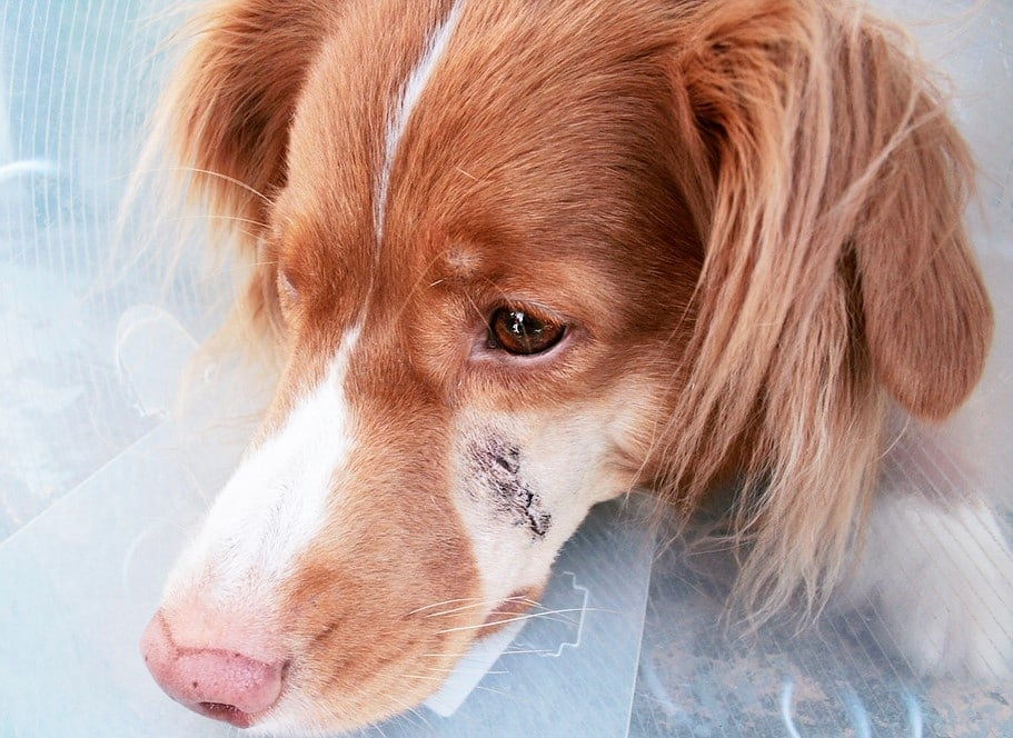 is hydrogen peroxide safe for dogs