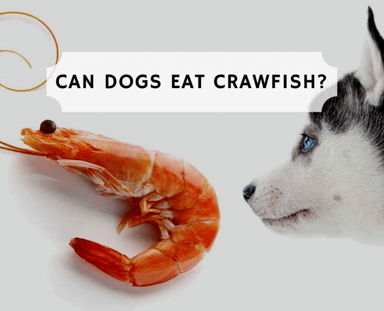 Can dogs eat crawfish?