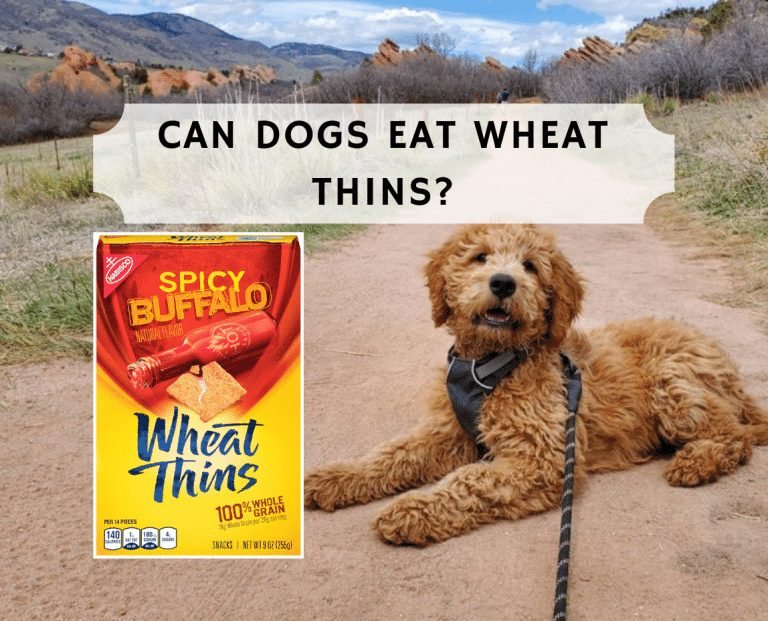 Can dogs eat wheat crackers?