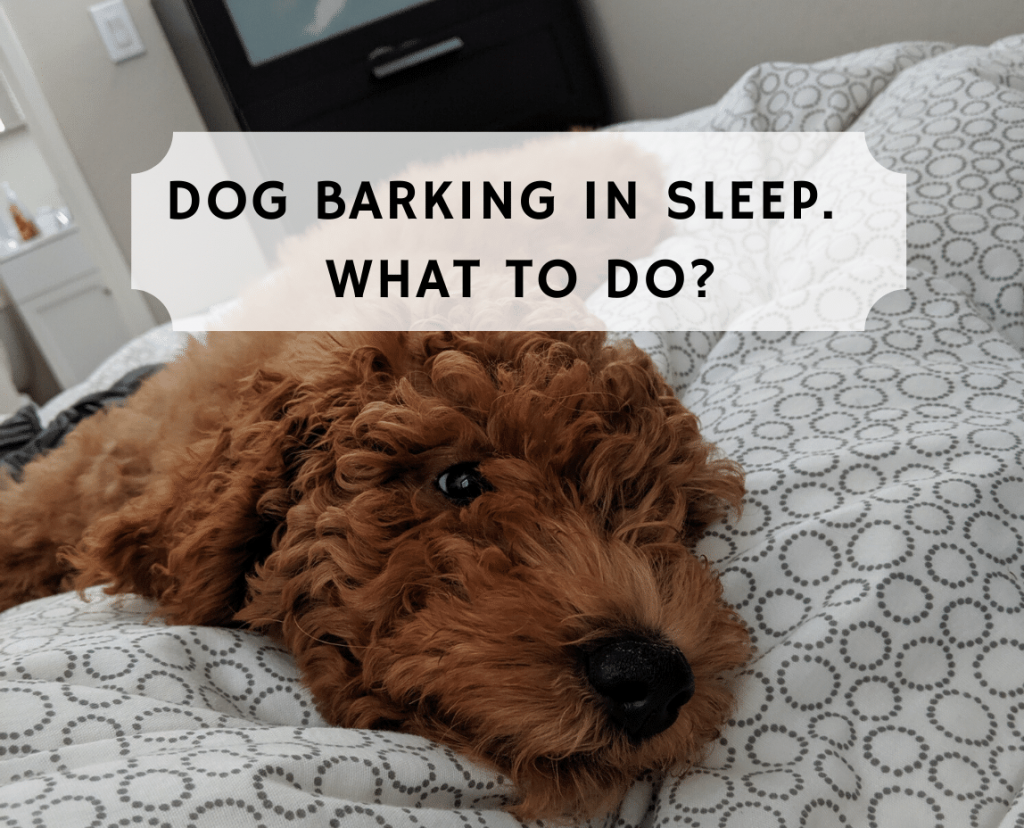 Dog barking in sleep.  What to do?
