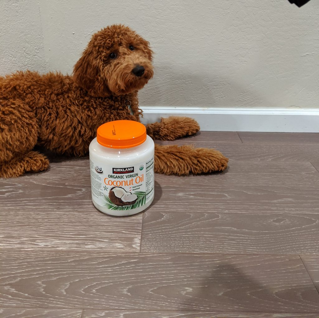 My dog ate coconut oil. What should I do?