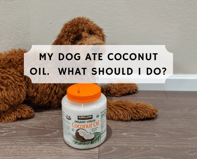 My dog ate coconut oil