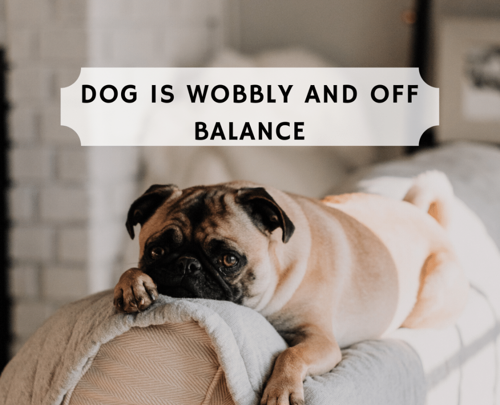 Dog is wobbly and Off Balance