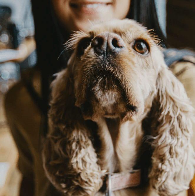 dog inner ear infection