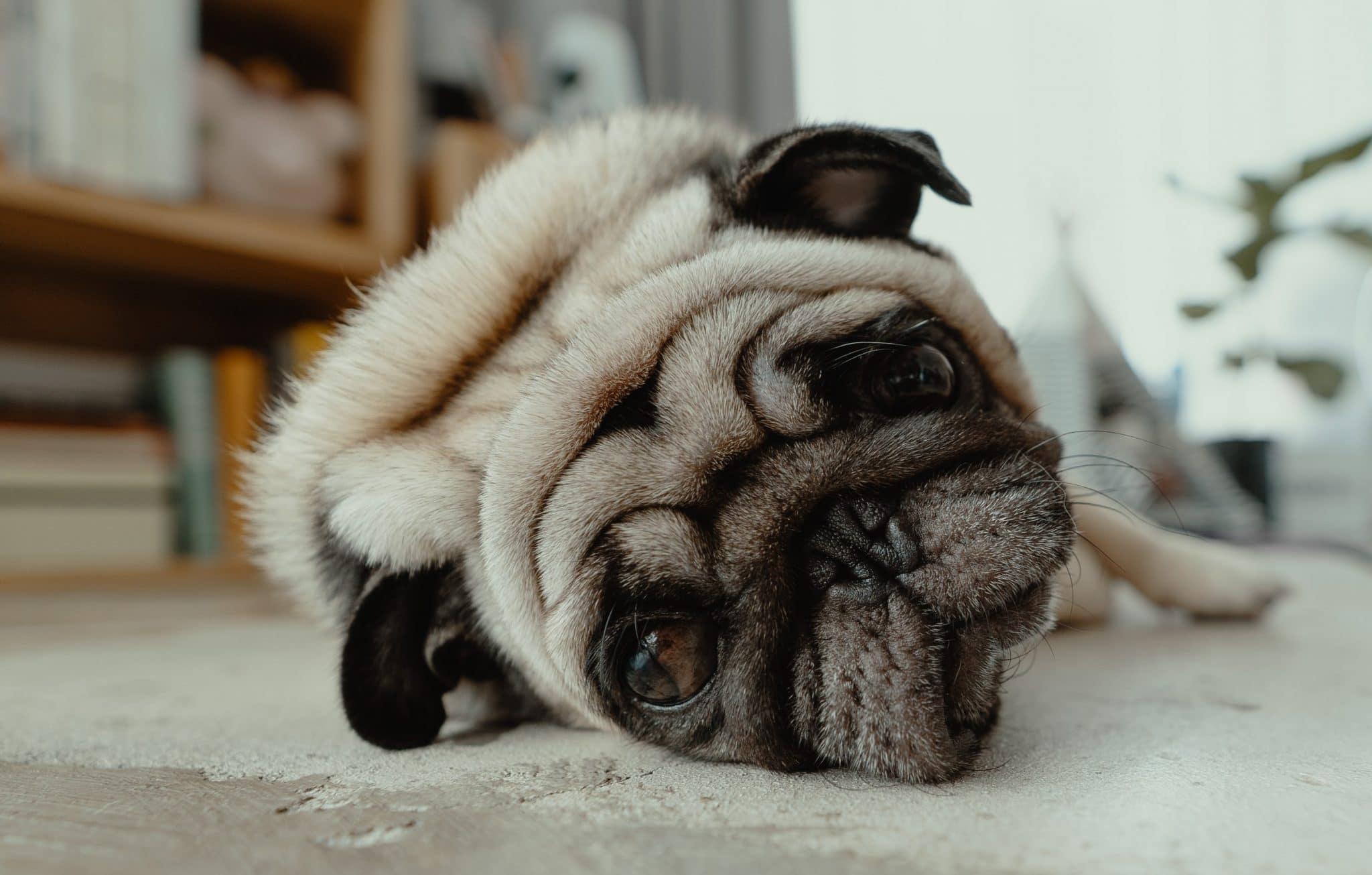 dog stroke wobbly and off balance