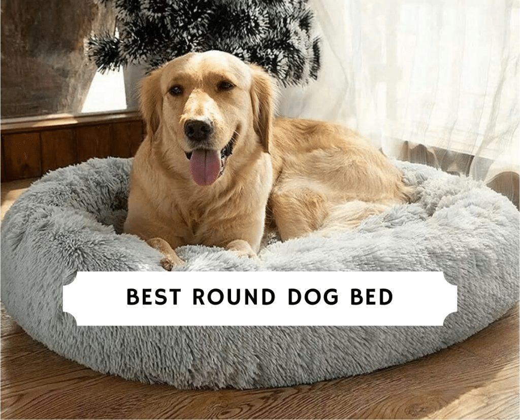 Best Round Dog Bed