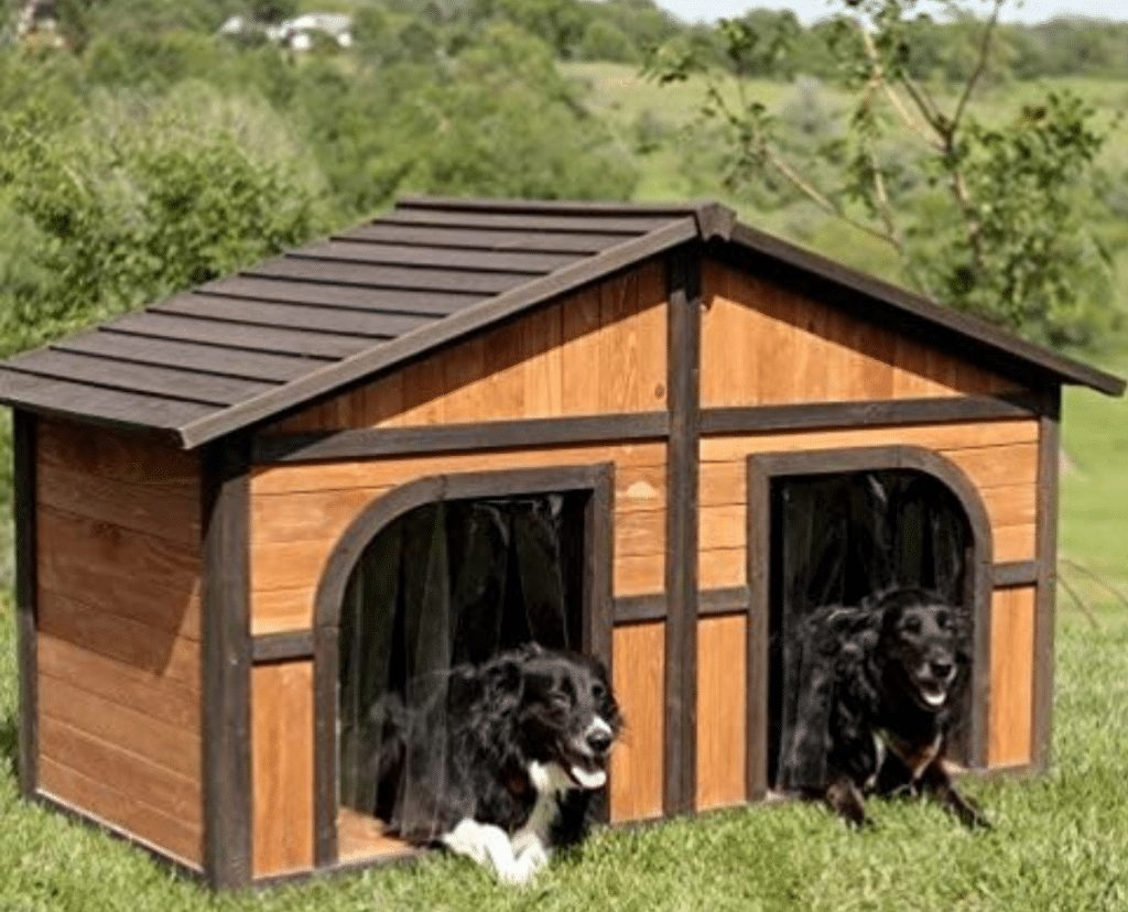 Double Dog House Picture
