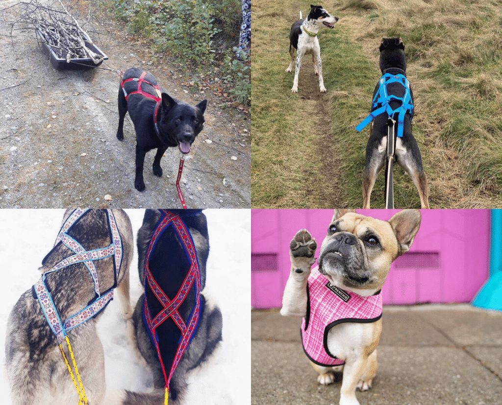 different types of dog pulling harness