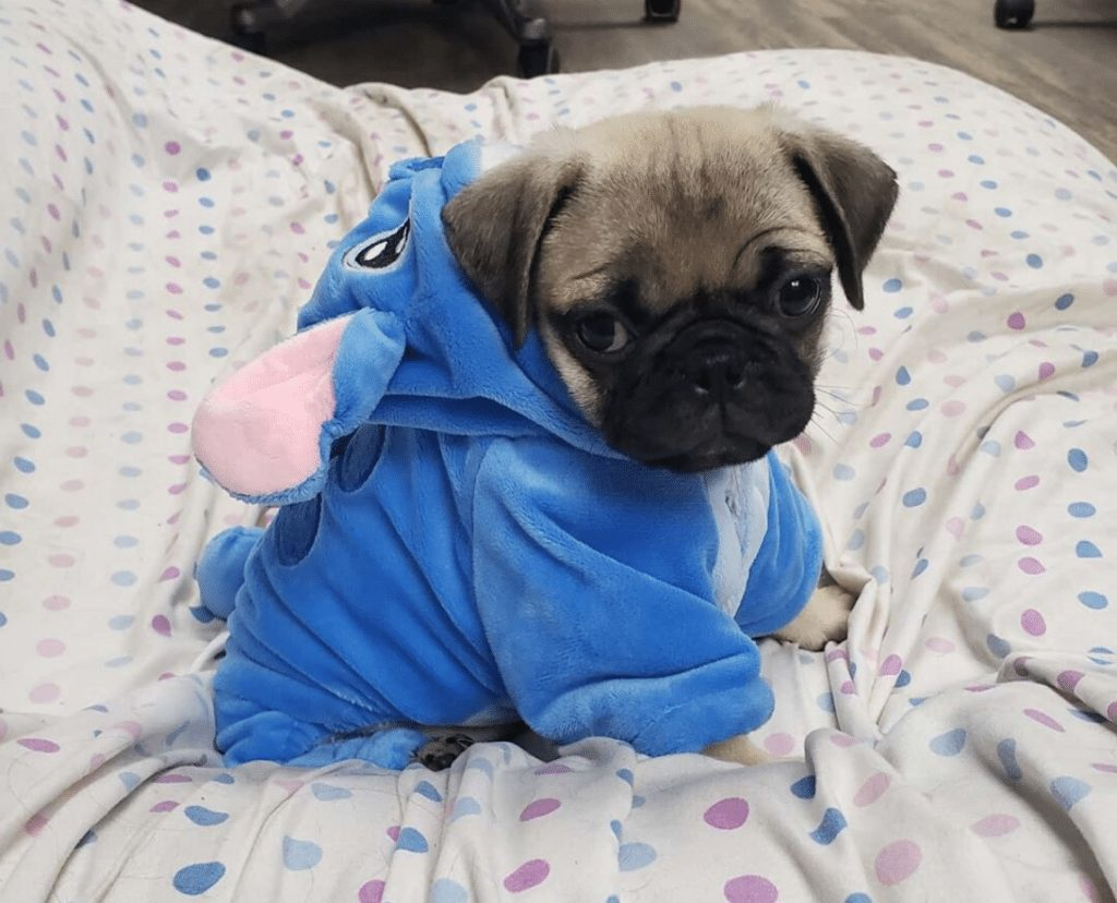 onesie for dogs