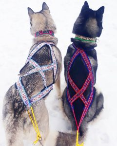 sled pulling harness for dogs