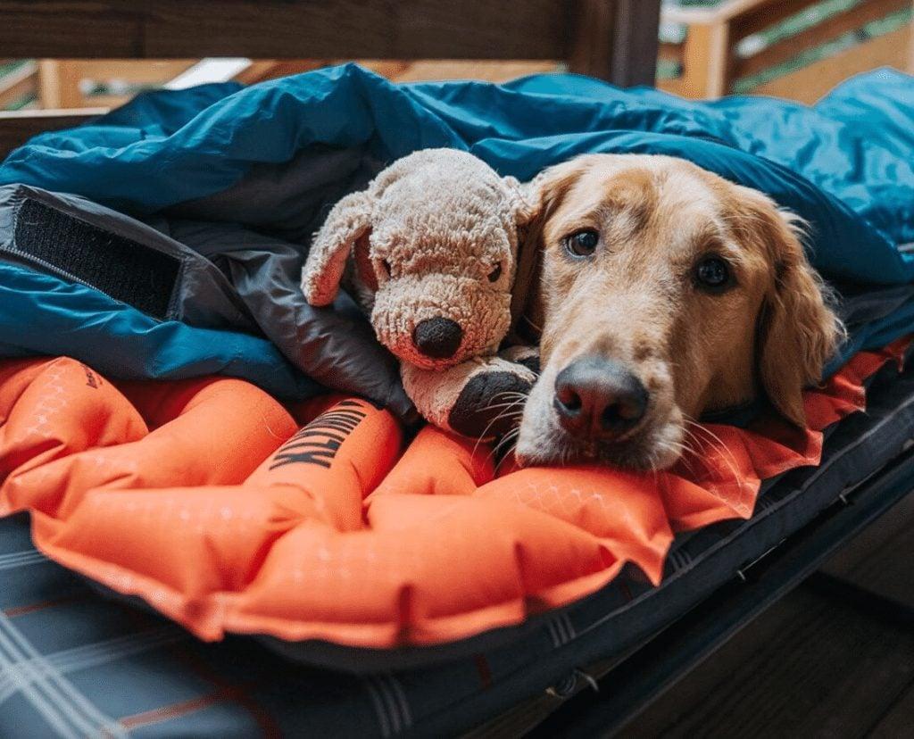 Backpacking Dog Bed
