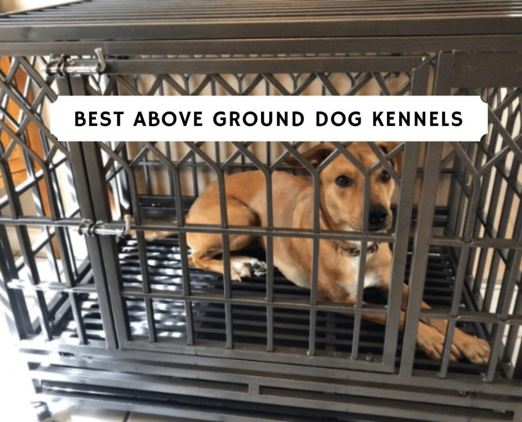 Best Above Ground Dog Kennels _ Off the Ground Dog Kennels