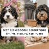 Best Bernedoodle Generations (F1, F1B, F1BB, F2, F2b, F2BB)