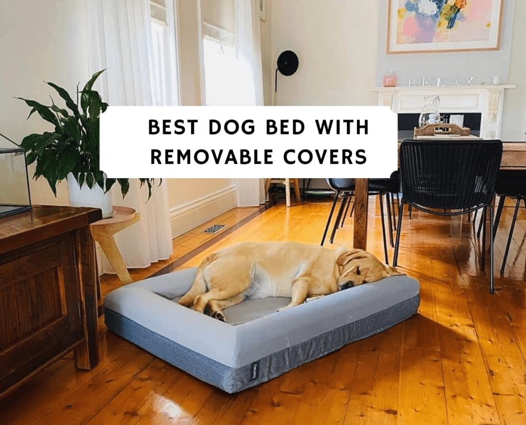 Best Dog Bed with Removable Covers