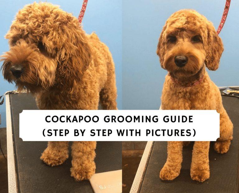 Cockapoo Grooming Guide