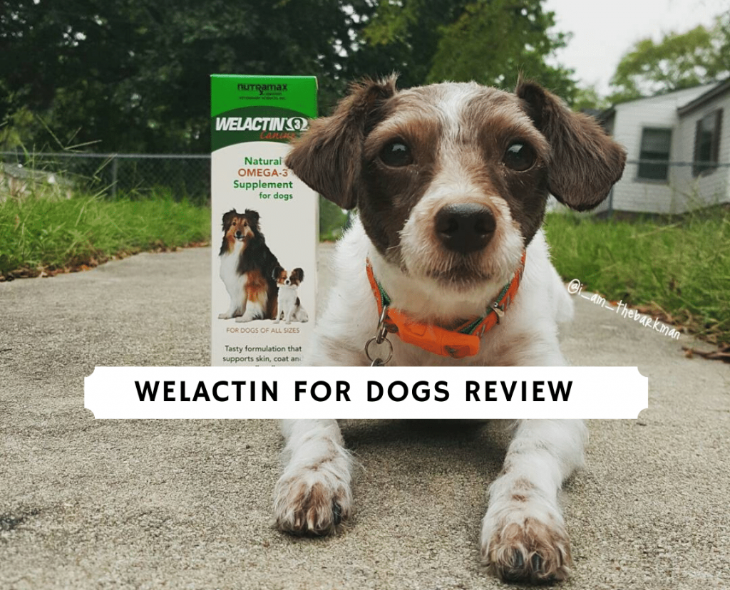 Welactin for Dogs Review
