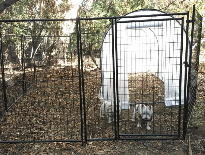 lucky dog kennel reviews