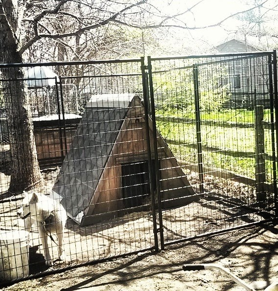 lucky dog modular chain link kennel reviews