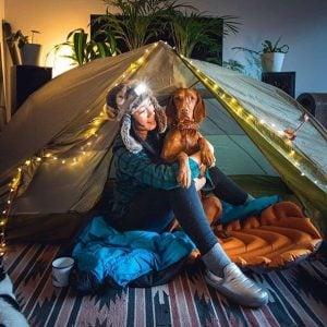 traveling dog bed