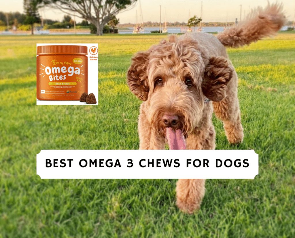 Best omega 3 chews for dogs