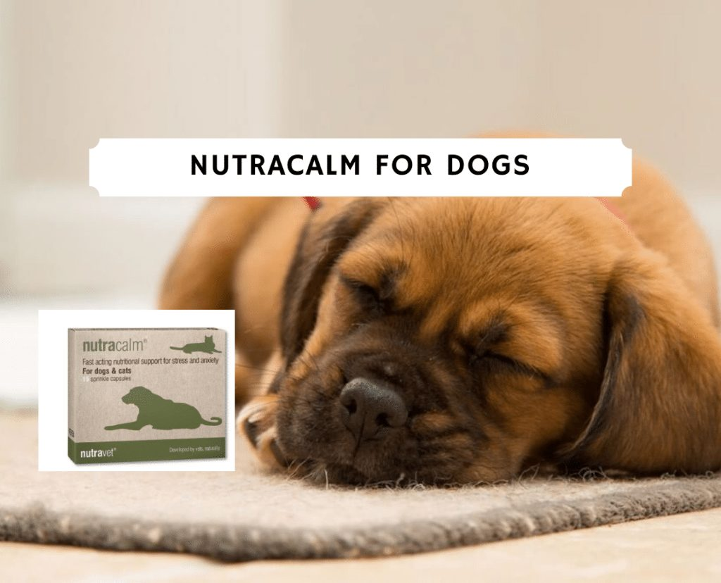Nutracalm for dogs (2020) - anxiety solution