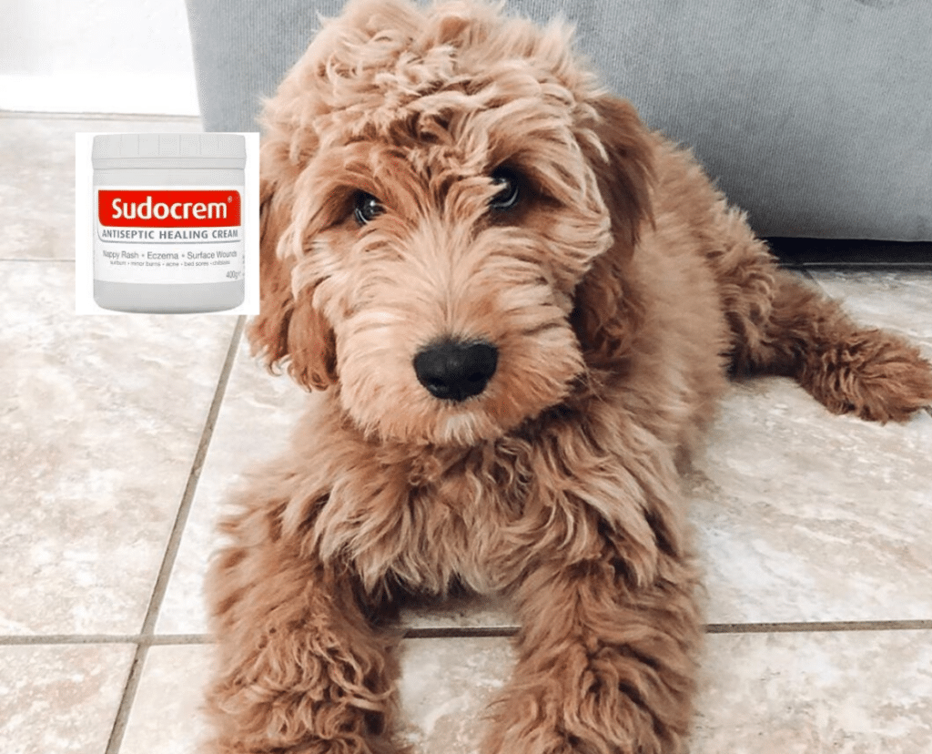 can you use sudocrem on dogs_