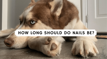 how long should do nails be_