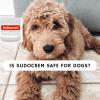 is sudocrem safe for dogs_