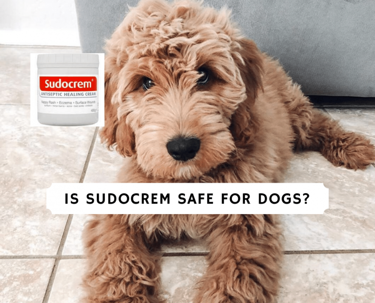 is sudocrem safe for dogs_