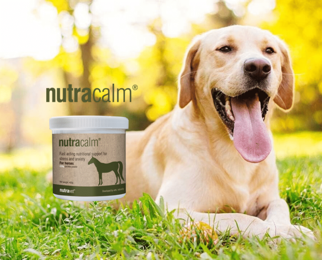 nutracalm for dogs anxiety