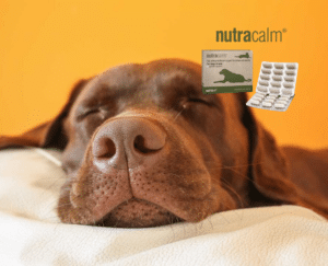 nutravet nutracalm for dogs picture