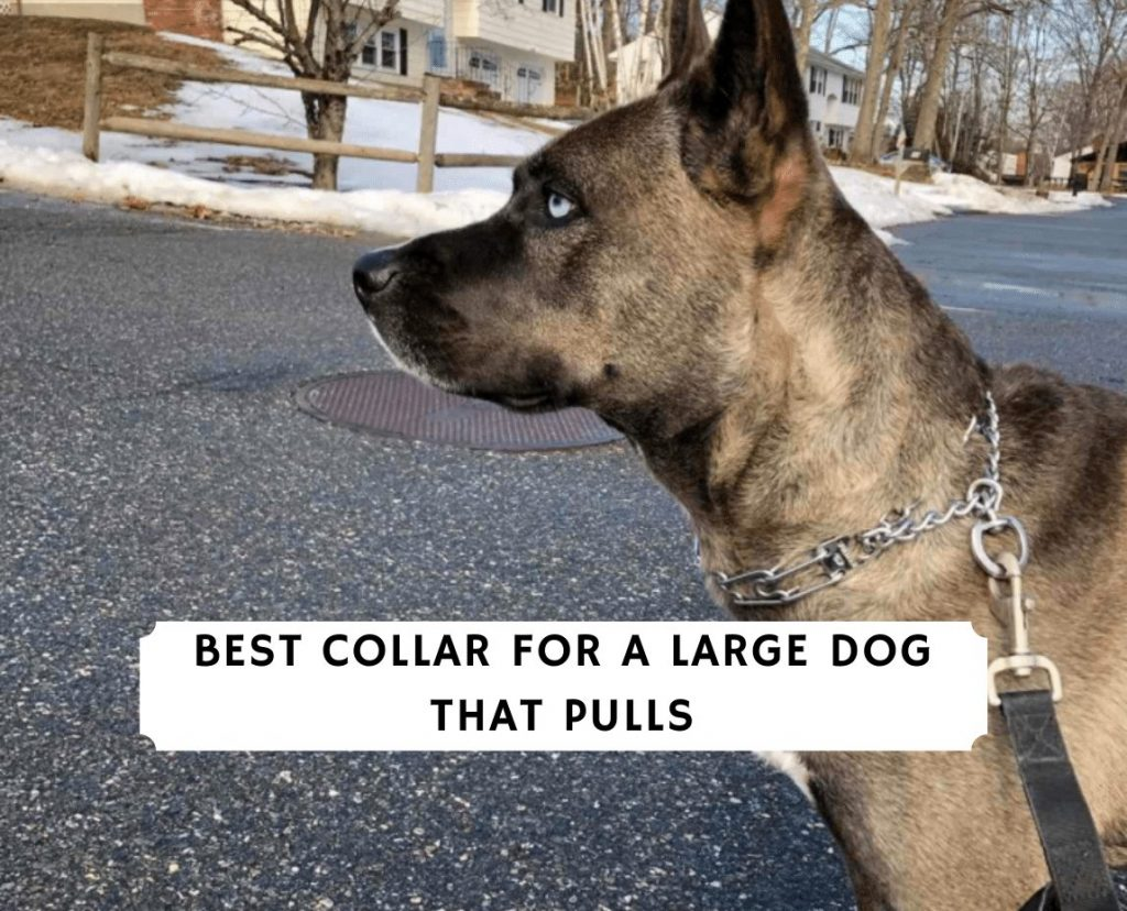 Best Collar for a Large Dog That Pulls