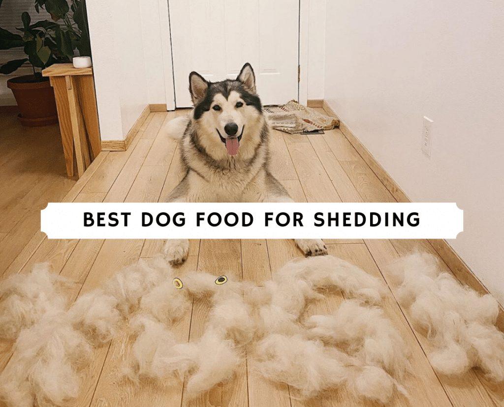 Best Dog Food for Shedding