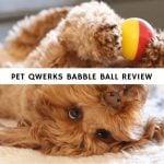 Pet Qwerks Babble Ball Review