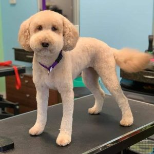 andis dog grooming clippers results