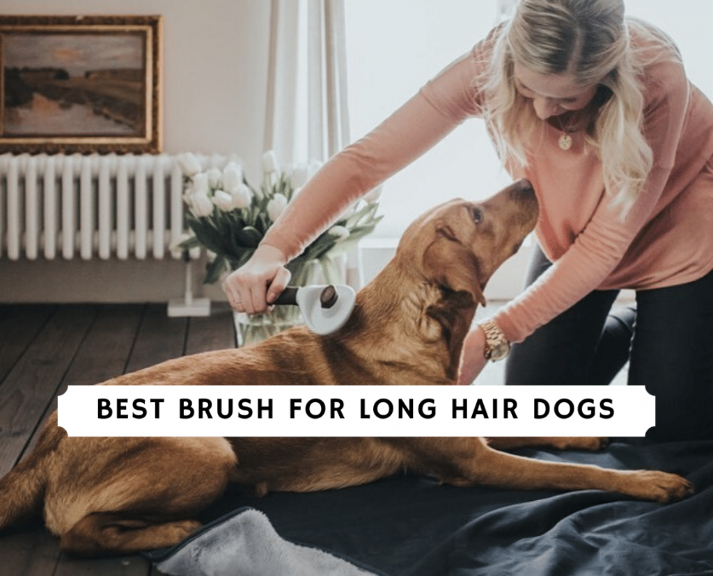 best brush for long hair dogs