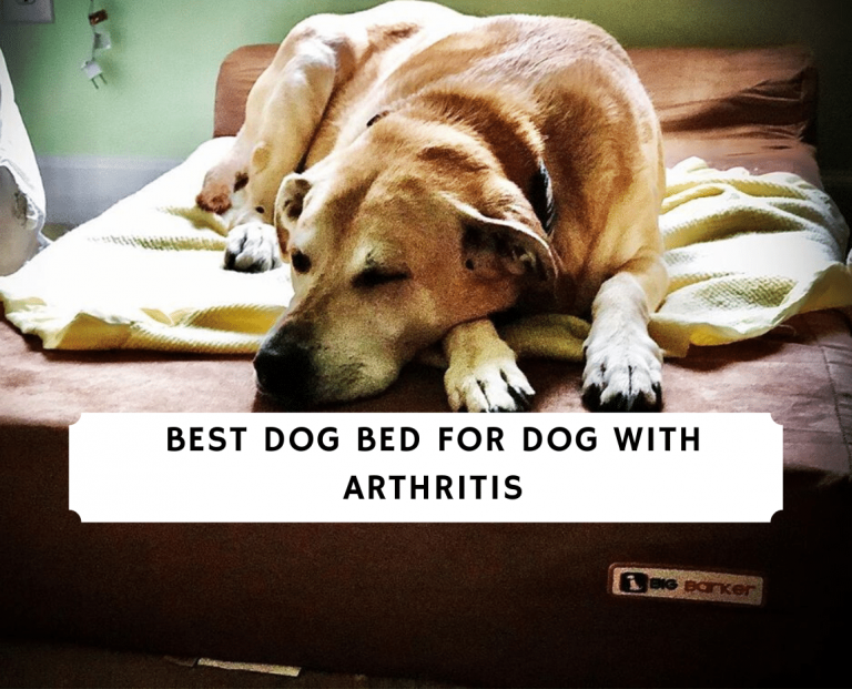 best dog bed for dog with arthritis
