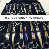 best dog grooming shears