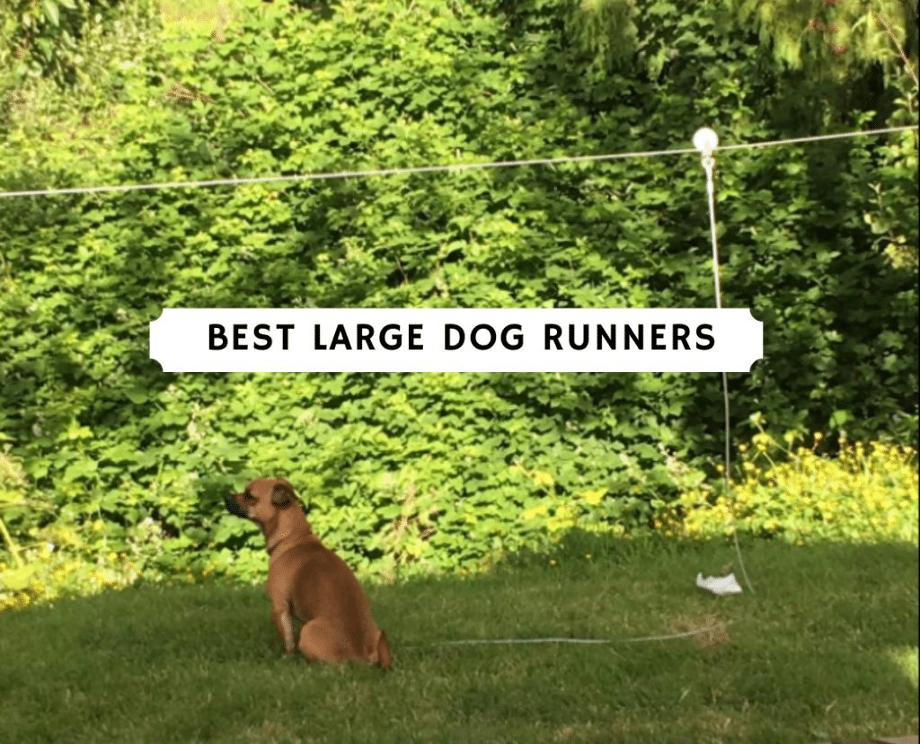 best large dog runners