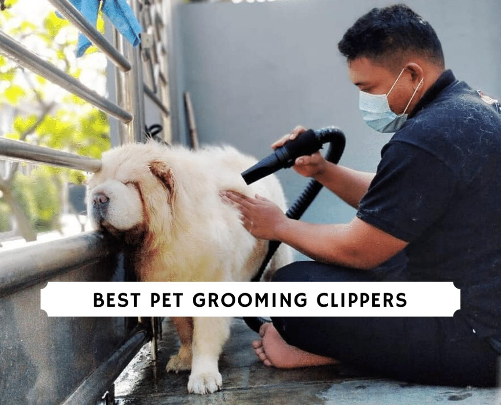 best pet grooming clippers