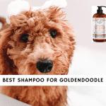 best shampoo for goldendoodle