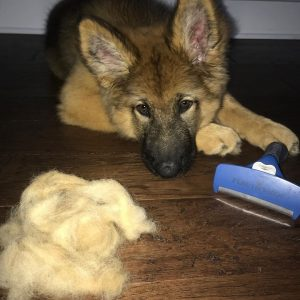 deshedding brush for a dog with long hair