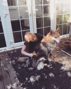 deshedding brush for a long haired dog