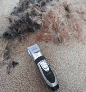 dog clipper from grooming kit cutting hair