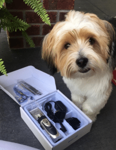 dog next to grooming kit