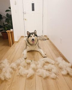 food for a dog that shedding