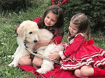 made for TV goldendoodle breeder texas
