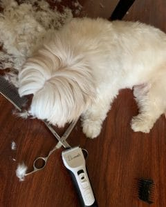 quiet dog clippers for grooming