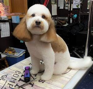 using dog grooming shears to trim dog