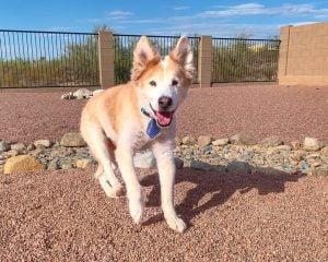 Arizona Small Dog Rescue